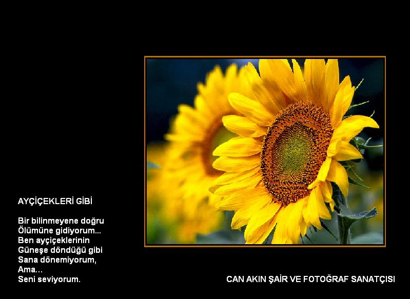 http://img.antoloji.com/siir/media/22/www_antoloji_com_948922_518.JPG
