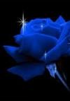 Mavi Rüya