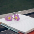 Çiçek Seval