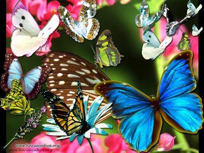 İkinci Dünyada Kelebekler Ölümsüz