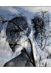Çınar Ağacım